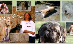 Fotocoollage mit meinen Hunden